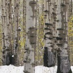 camo trees