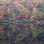 eastern reflect
