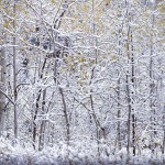 Open snow fall