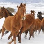 horse angle